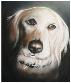 pet-portraits-one-golden-dog