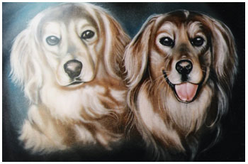 pet-portraits-two-golden-dogs