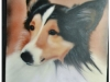pet-portrait-collie-head