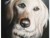 pet-portraits-one-golden-dog