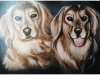 pet-portraits-two-golden-dogs